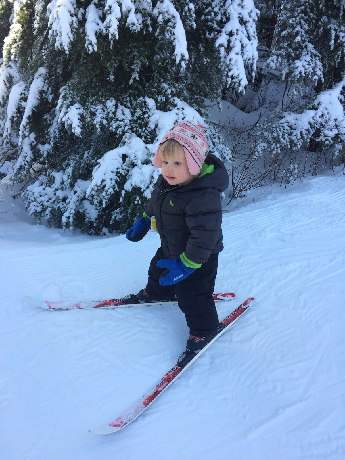 Cross Country Skiing With A Toddler 5 Tips Born To Be Adventurous Ski Tow Harness Our Daughter Fell Few Times But Was Still Totally Stoked Keep Im Sure That Some Other Day She Might Not So Gung Ho